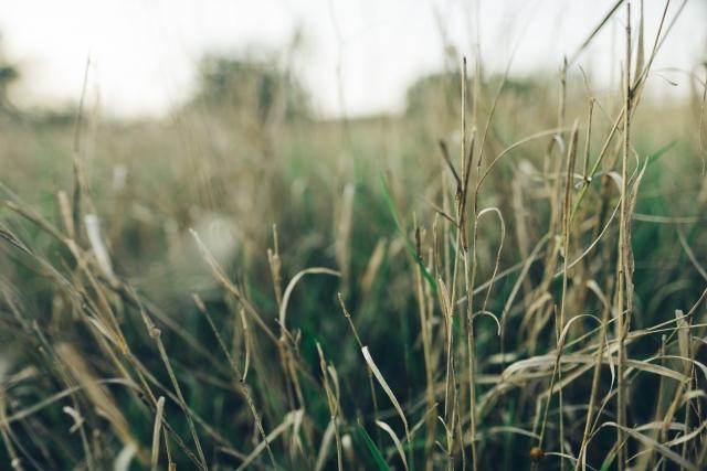 雑草イメージ